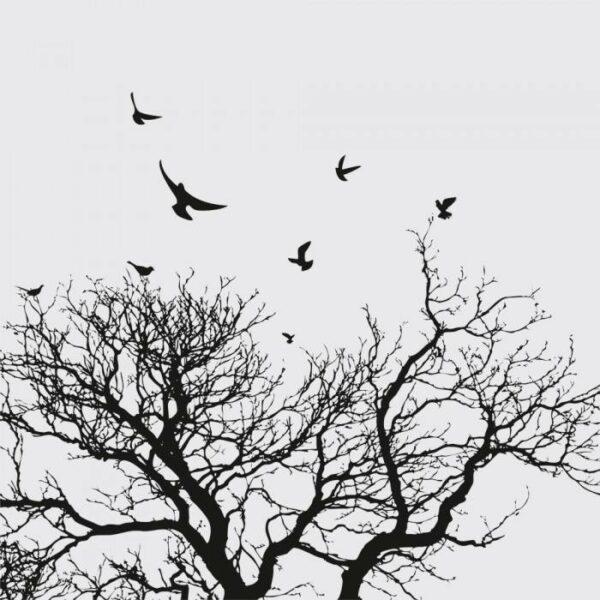 Постеры Черно-белые птицы