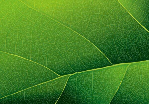 Печать на холсте Зеленый лист