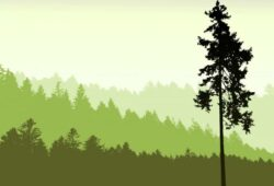 Природа и пейзажи