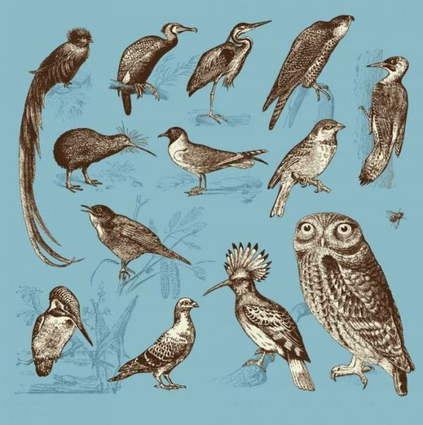 Постеры Дикие птицы