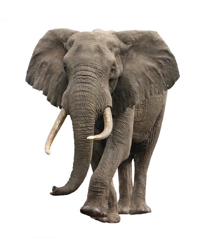 Японские панели Слон