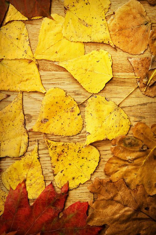 Римские шторы Осенние листья