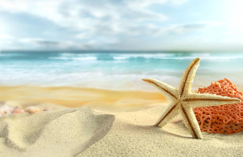 Постеры Морская звезда