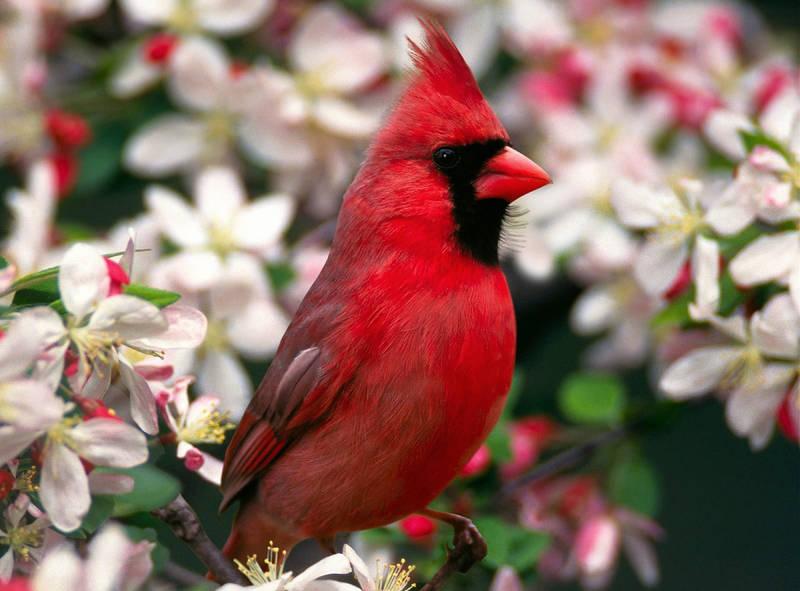 Постеры Птичка