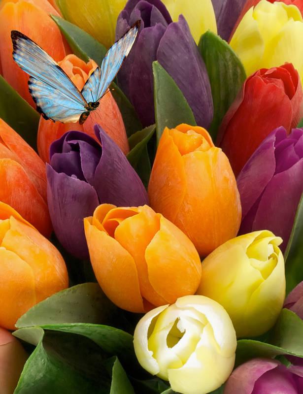 Печать на холсте Разноцветные тюльпаны