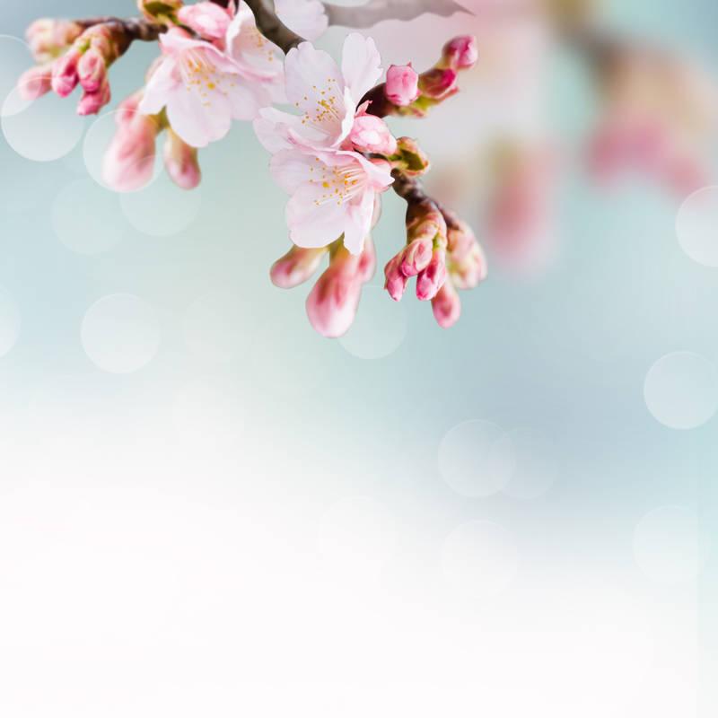 Римские шторы Цветки яблони