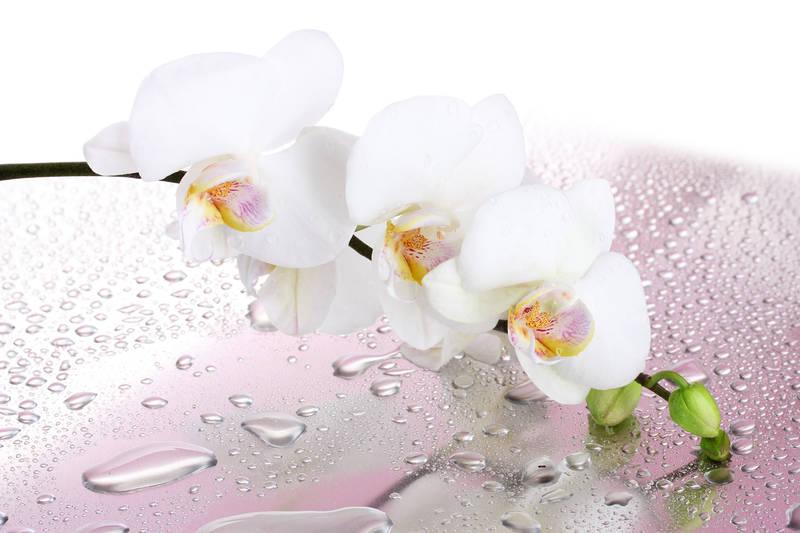 Фотообои под заказ Белая орхидея