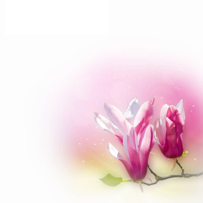 Японские панели Розовые цветы