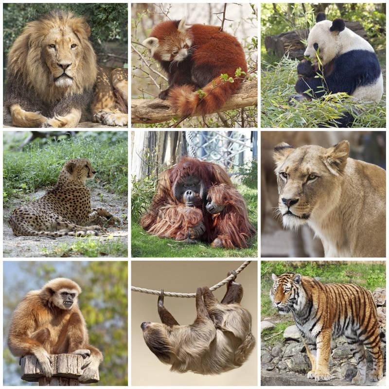 Фотообои под заказ Дикие животные
