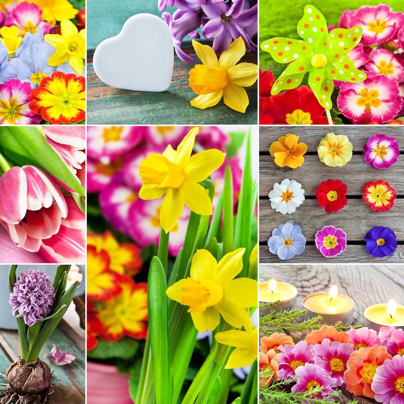 Фотообои под заказ Яркие цветы