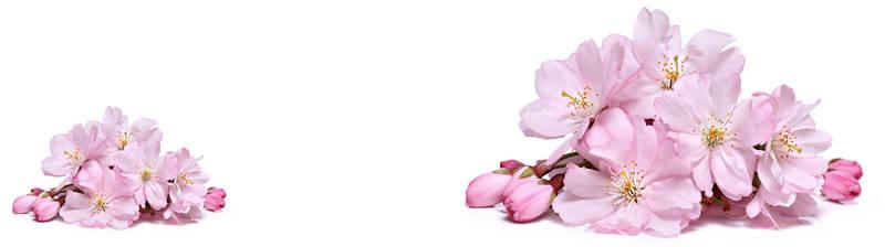 Скинали для кухни Цветки вишни