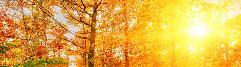 Печать на холсте Солнечная осень