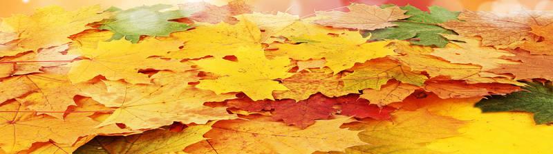Печать на холсте Осень