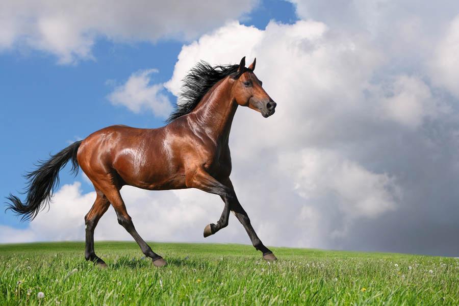 Римские шторы Лошадь, дизайн #06222