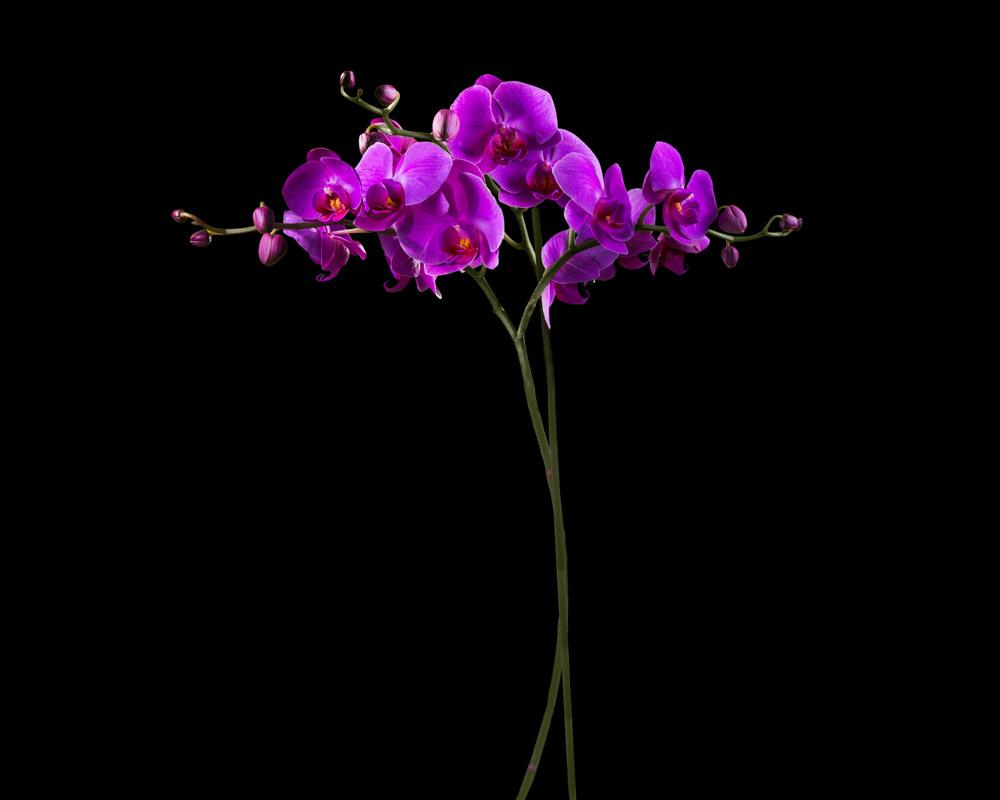 Римские шторы Орхидея, дизайн #06343