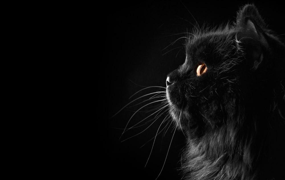 Римские шторы Черный кот, дизайн #06815
