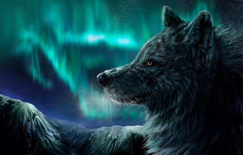 Римские шторы Волк, дизайн #07600
