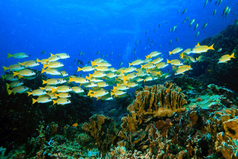 Фотообои под заказ Рыбки, дизайн #08042