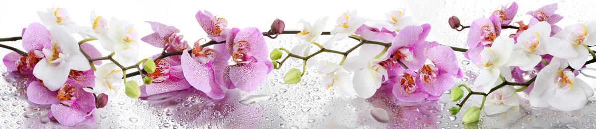 Орхидеи, дизайн #08827